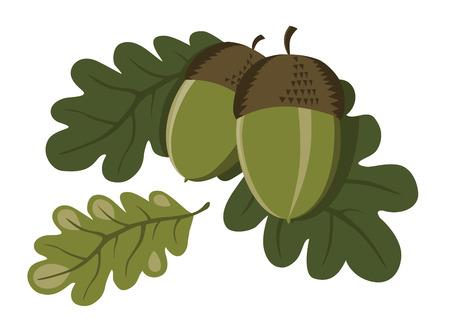 foglie di quercia: Foglie illustrazione decorativi di ghiande fresche verde con il rovere