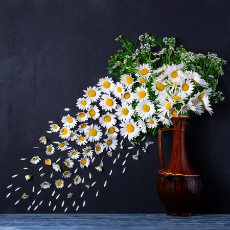 marguerite: A bouquet of chamomiles in a vase. The wind blows off the petals