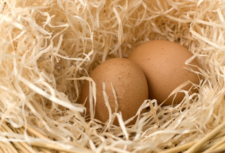 two eggs in nest  Stock Photo