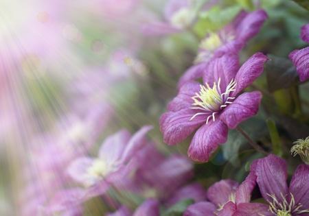 milagro: Hermosas flores en la luz del sol
