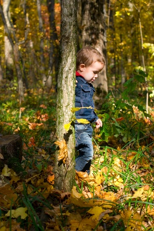 Cute boy and autumn in a forest photo