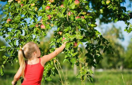 grab: A little girl picking an apple from a tree, the weather is sunny