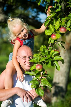 late summer: Young girl sitting on the should of her daddy picking an apple from a tree