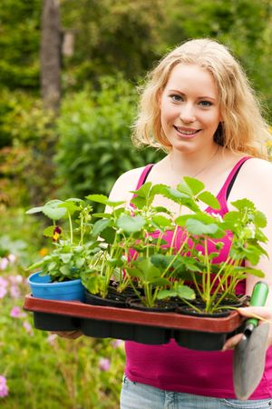 attempting: Gardening - Young blonde woman with strawberry seedlings attempting to plant them in her garden