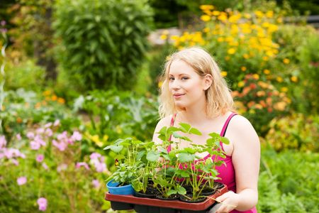 Gardening - Young blonde woman with strawberry seedlings attempting to plant them in her garden Stock Photo - 6117295