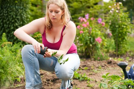 Woman planting strawberry seedling in her garden Stock Photo - 6117299