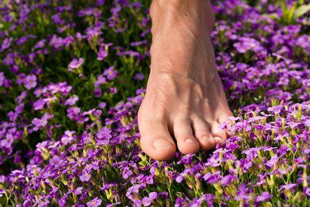 shoeless: Healthy feet series: male foot standing in a field of flowers
