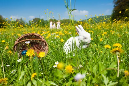 Easter bunny on a beautiful spring meadow with dandelions in front of a basket with Easter eggs; children in the background coming on an Egg hunt  photo