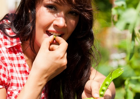 nibbles: Gardening in summer - woman harvesting peas and nibbles from the bush