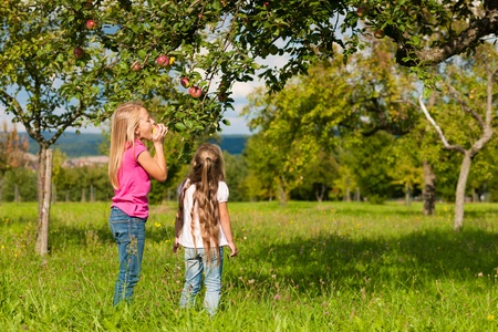 apple orchard: Children eating and harvesting apples in a garden on a wonderful sunny day Stock Photo