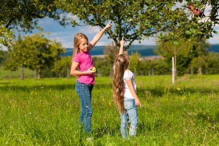 Children eating and harvesting apples in a garden on a wonderful sunny day Stock Photo - 10582509