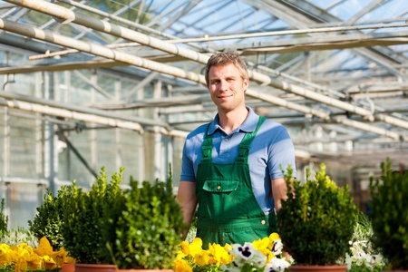 Male florist or gardener in flower shop or nursery greenhouse Stock Photo - 11193702