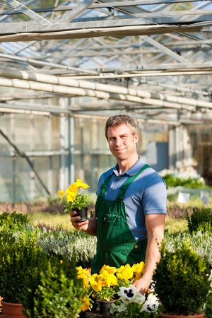 Male florist or gardener in flower shop or nursery greenhouse photo