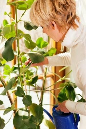 windowsill: Woman watering the plants sitting on her windowsill, the scene is sunlit