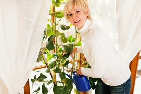 indoor plants: Woman watering the plants sitting on her windowsill, the scene is sunlit