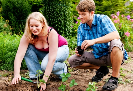 technically: Couple planting strawberry seedlings in their garden - technically she is doing the work while he is watching