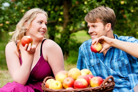 Couple (man and woman) eating freshly harvested apples - in front of them a basket with lots of fresh fruit Stock Photo - 11912280