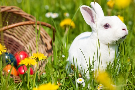 easter egg hunt: Easter bunny with eggs on a meadow in spring Stock Photo