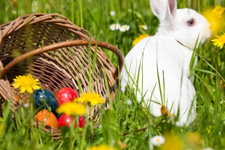 Easter bunny with eggs on a meadow in spring photo