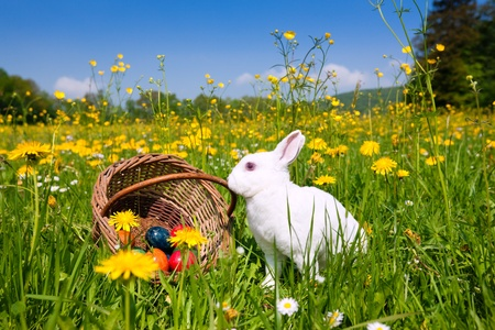 easter basket: Easter bunny with eggs on a meadow in spring Stock Photo