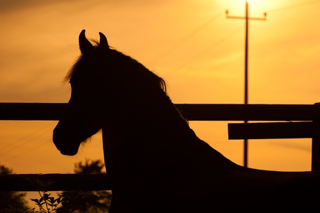 tranquilly: Horse in sunset out at feed