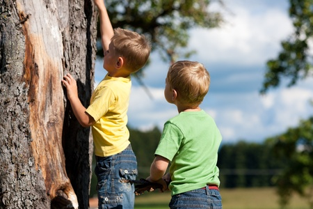 Two little boys climbing on a tree on a summer day photo