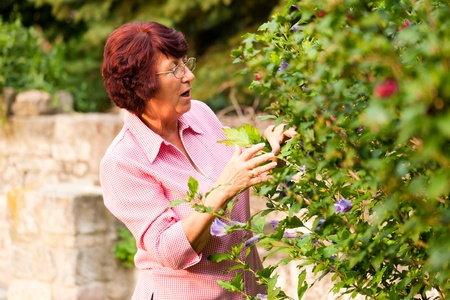 flower bed: Woman is cutting flowers in her garden on a wonderful sunny day Stock Photo