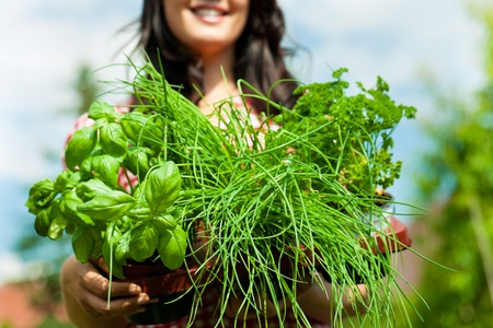 Gardening in summer - happy woman with different kind of fresh herbs photo