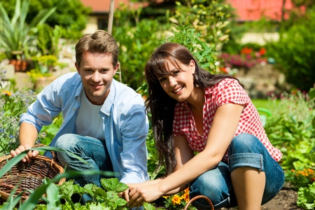vegetables young couple: Gardening in summer - happy couple harvesting and having lots of fun Stock Photo