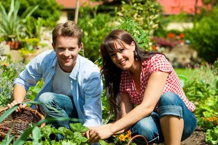 Gartenarbeit im Sommer - glückliche Paar Ernte und mit viel Spaß Standard-Bild