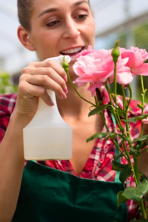 Female florist or gardener in flower shop or nursery with roses Stock Photo - 16883954