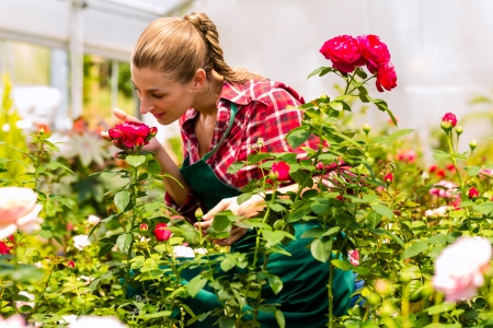 Female florist or gardener in flower shop or nursery with roses Stock Photo - 16883593