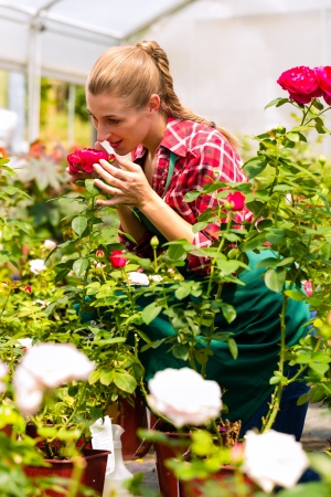 Female florist or gardener in flower shop or nursery with roses Stock Photo - 16883732