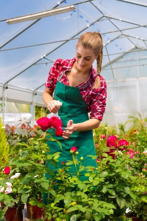Female florist or gardener in flower shop or nursery with roses