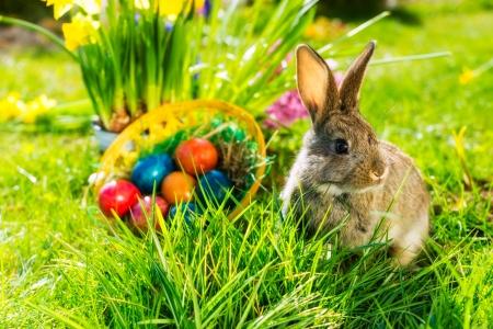 春の牧草地のバスケットに卵をイースターのウサギの生活