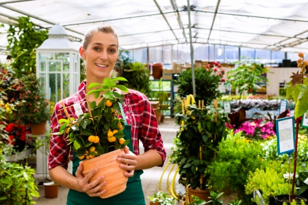 flower shop: Female florist or gardener in flower shop or nursery