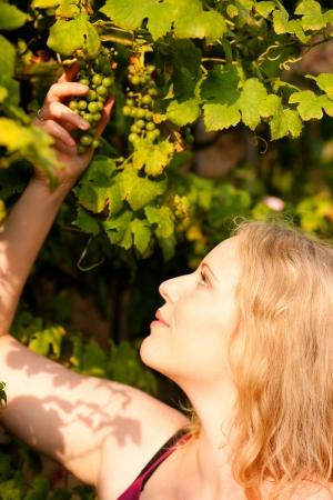 winemaker: Winemaker checking the status of her wine grapes Stock Photo