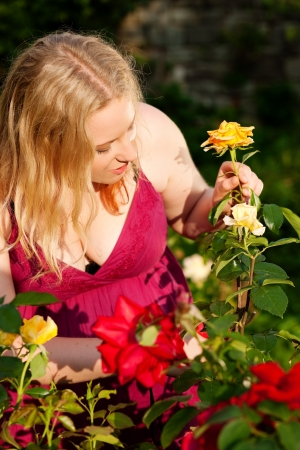 Woman doing garden work cutting the roses at beautifully sunny day Stock Photo - 17743430