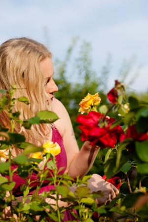 Woman doing garden work cutting the roses at beautifully sunny day Stock Photo - 17743373
