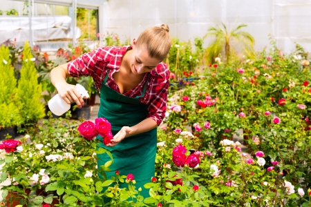 Female florist or gardener in flower shop or nursery with roses photo