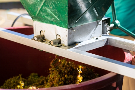 Grape harvesting machine or juicer at work with many grapes photo