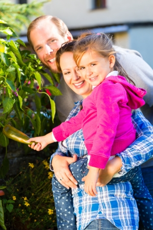 Mother, father and daughter in garden harvesting vegetables photo