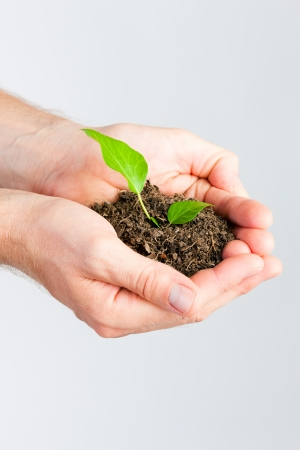 seedling growing: Man holding seedling in his hands in front of white background Stock Photo