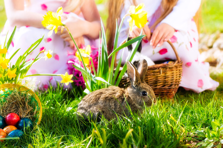 egg hunt: Living Easter bunny with eggs in a basket on a meadow in spring, children in the background Stock Photo