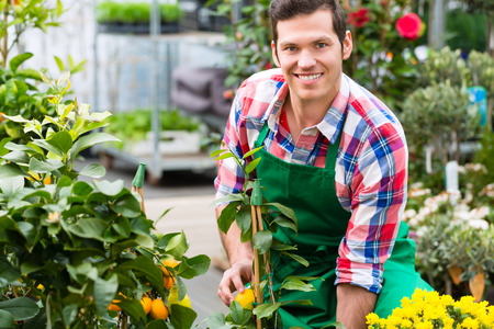 floriculture: Florist or gardener in flower shop, greenhouse or nursery Stock Photo