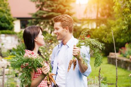 Gardening in summer - happy couple in vegetable garden harvesting carrots and having lots of fun photo