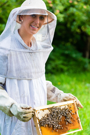 beekeeper: Beekeeper controlling beeyard and bees Stock Photo