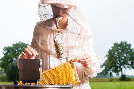extractor: Beekeeper filling honeycombs in honey extractor