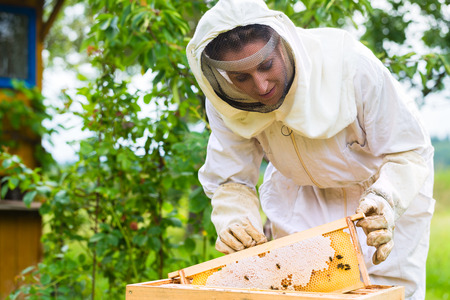 beekeeping: Female beekeeper controlling beehive and comb frame
