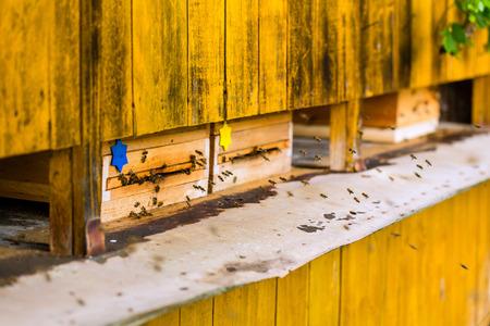 apiary: Beeyard or beehive at apiary